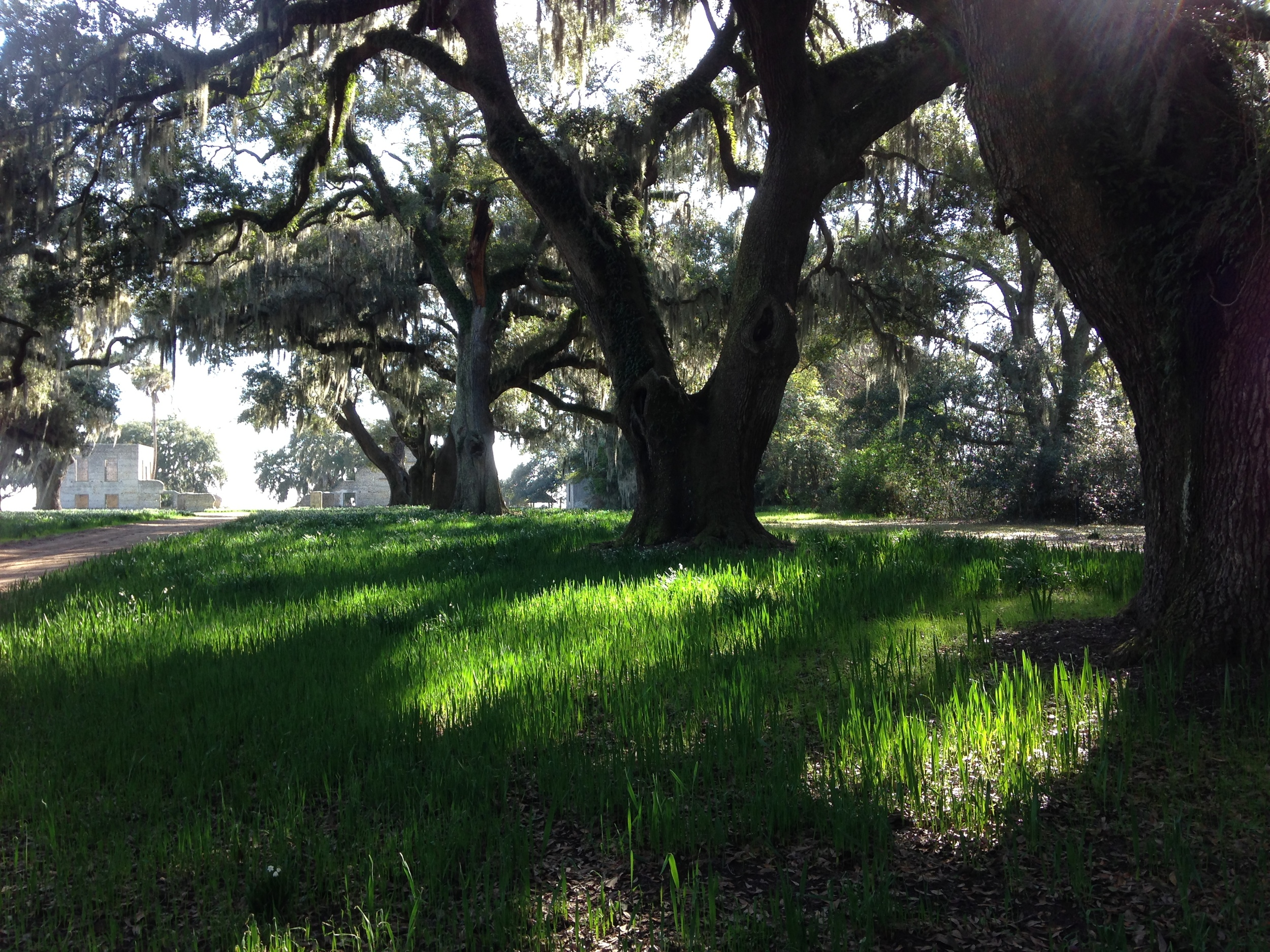 Avenue of Oaks leading down to the historic ruins of a once thriving plantation, perhaps the symbol of the merging ofpast and present on Spring Island.