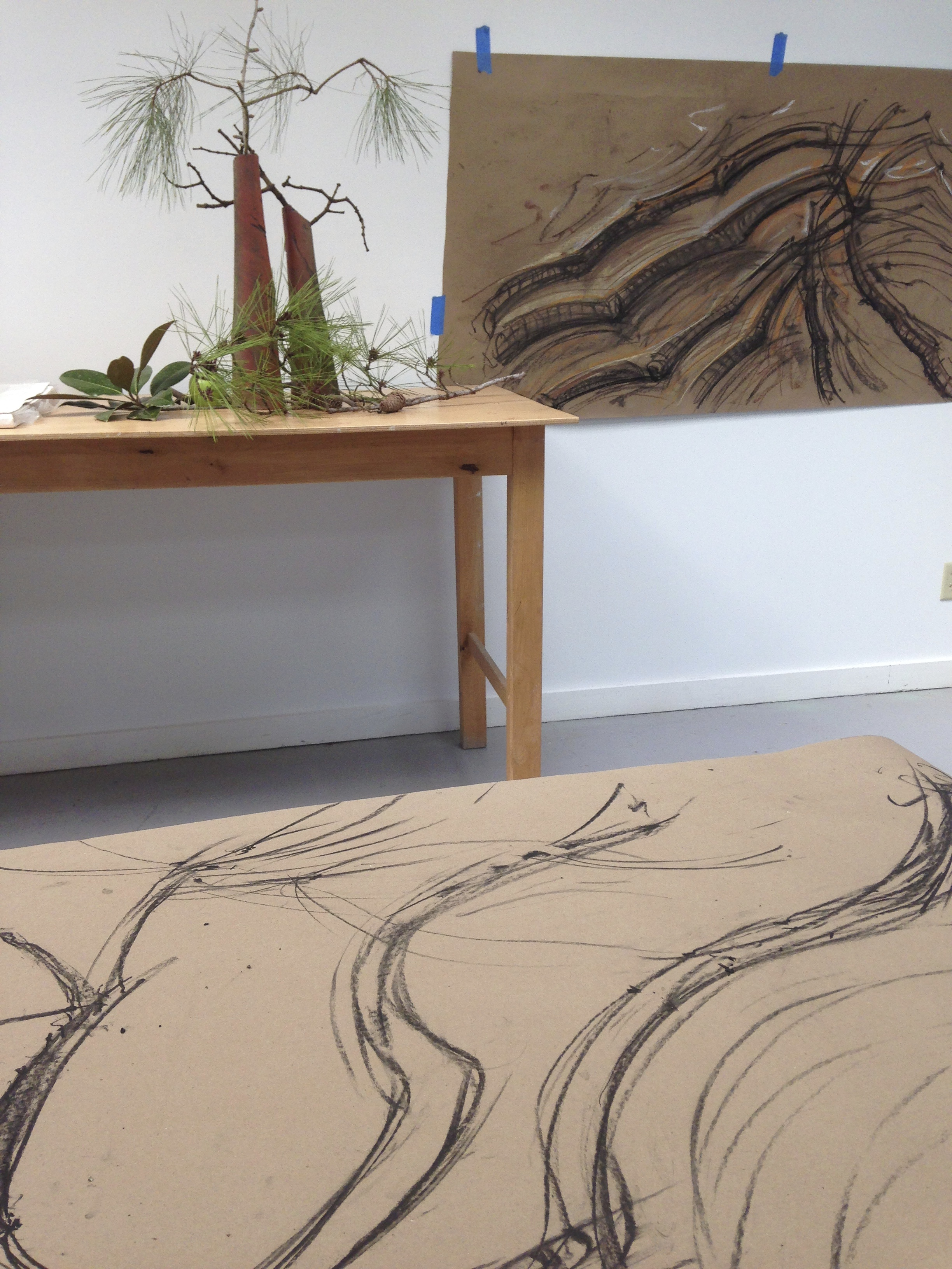 In this large charcoal drawing you can see the influence of those long needled pine branches I collected from the tree just outside the studio.