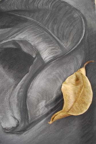 Alice Ballard, gift from Alex , charcoal, ebony pencil, conte,22 x 20 inches