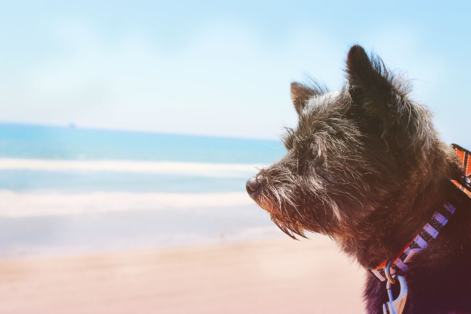 Frodo admiring the beach.jpg