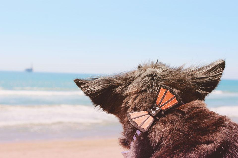 Frodo at the beach.jpg