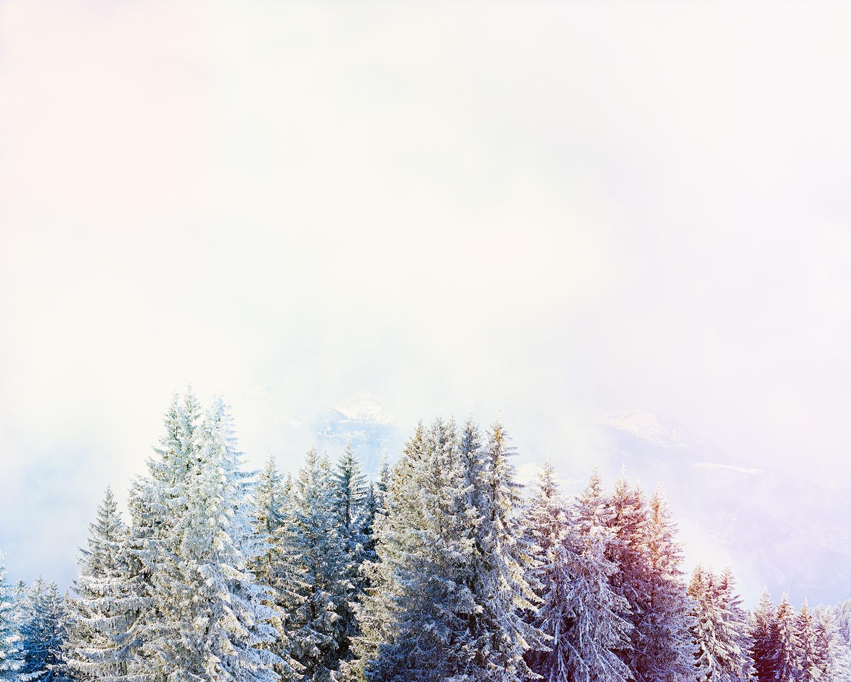 Blog - White trees.jpg