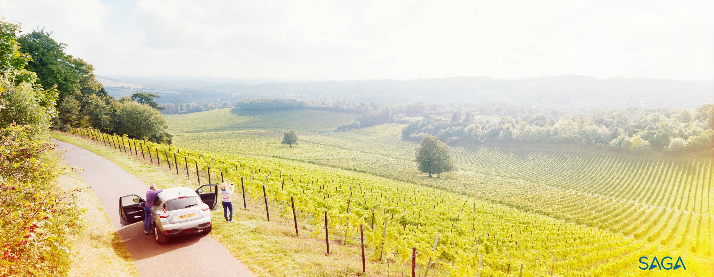 Saga - Vineyard - landscape.jpg