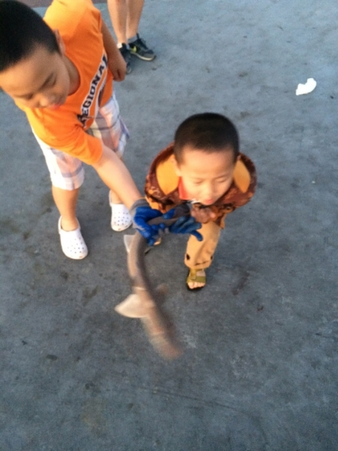 Brother Grabs Shark