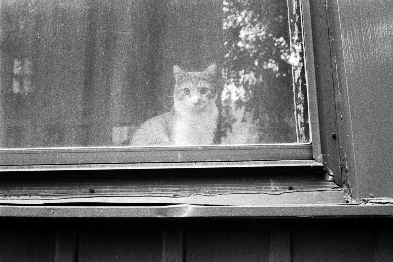 cat-window-montreal.jpg