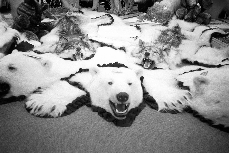 bear-skins-montreal-2.jpg