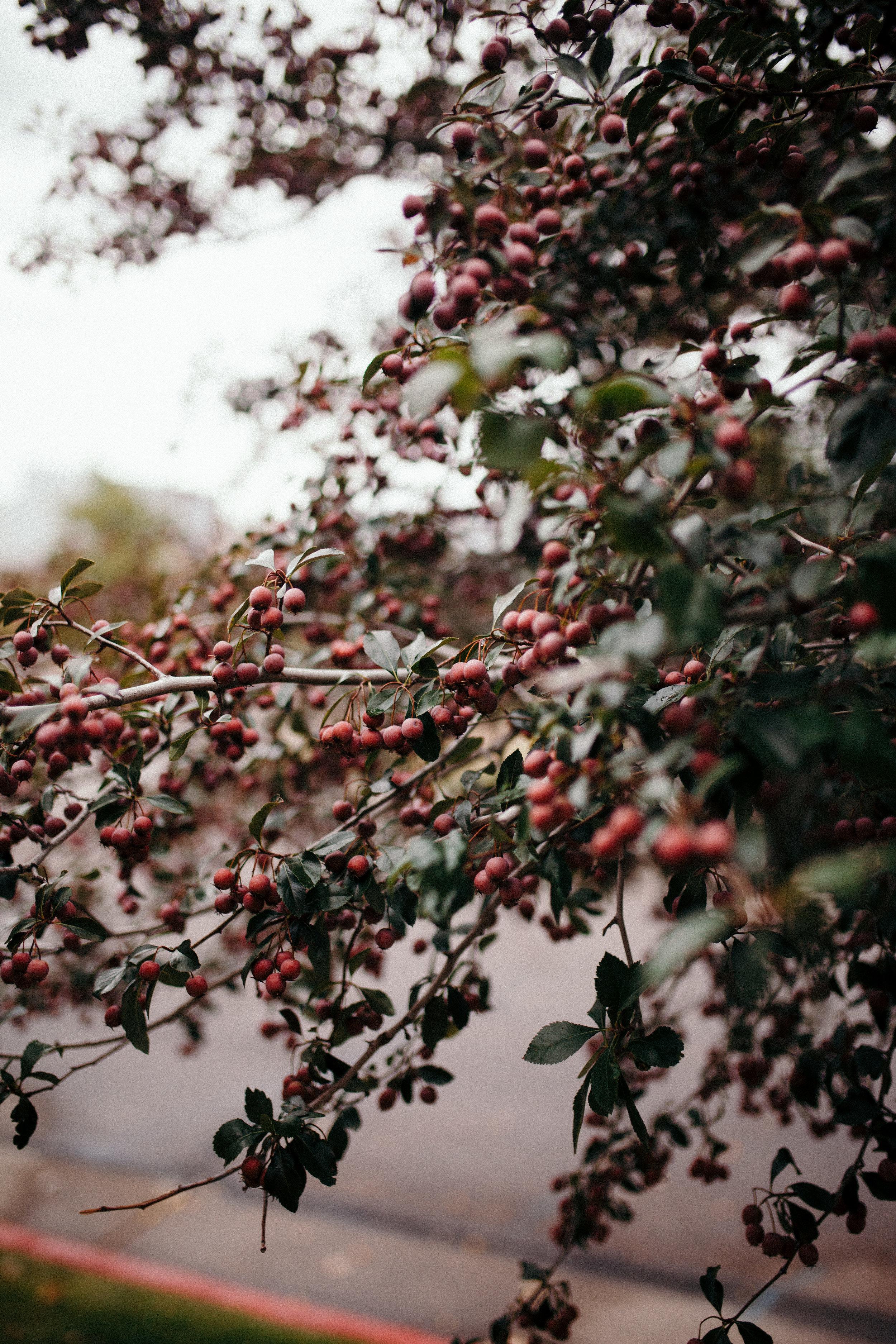 fall-3-5K.jpg