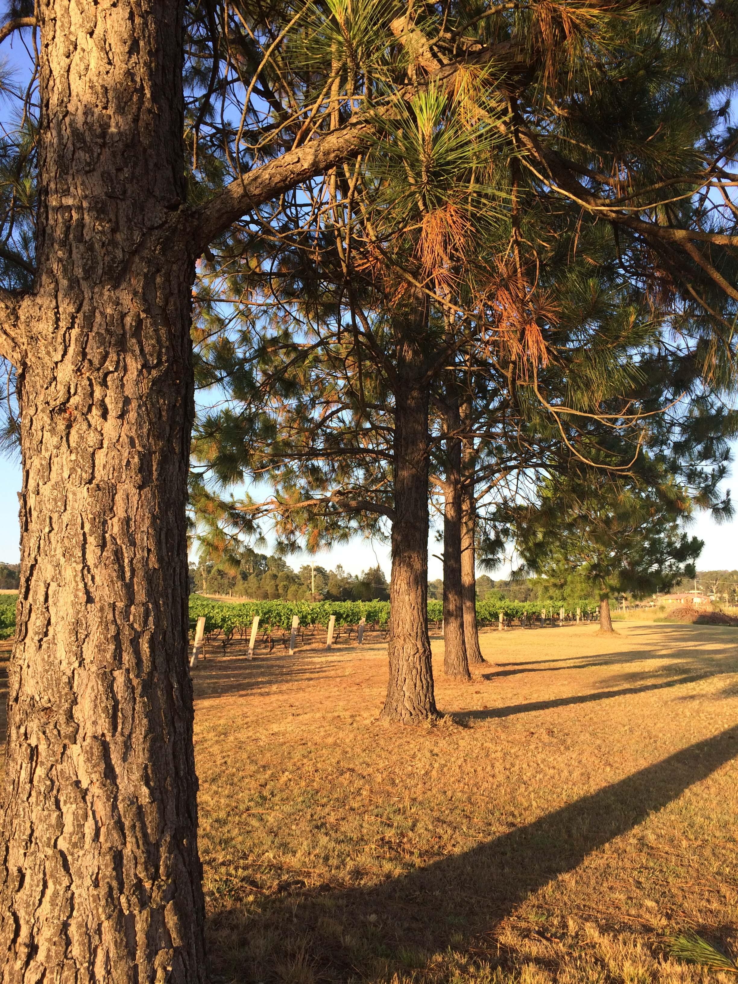 sun trees.jpg