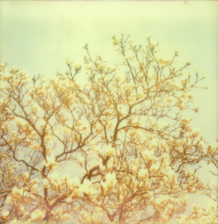 Polaroids on a hazy morning-14.jpg