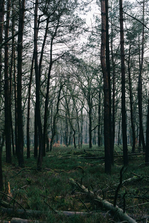 Bos-Hoog-Soeren-forest-walk-Apeldoorn-by-on-a-hazy-morning-2.jpg