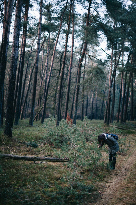Bos-Hoog-Soeren-forest-walk-Apeldoorn-by-on-a-hazy-morning-4.jpg