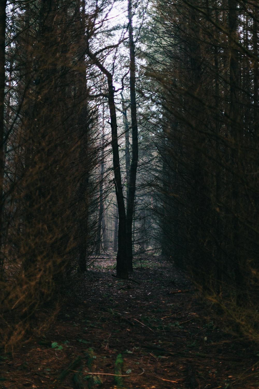 Bos-Hoog-Soeren-forest-walk-Apeldoorn-by-on-a-hazy-morning-12.jpg