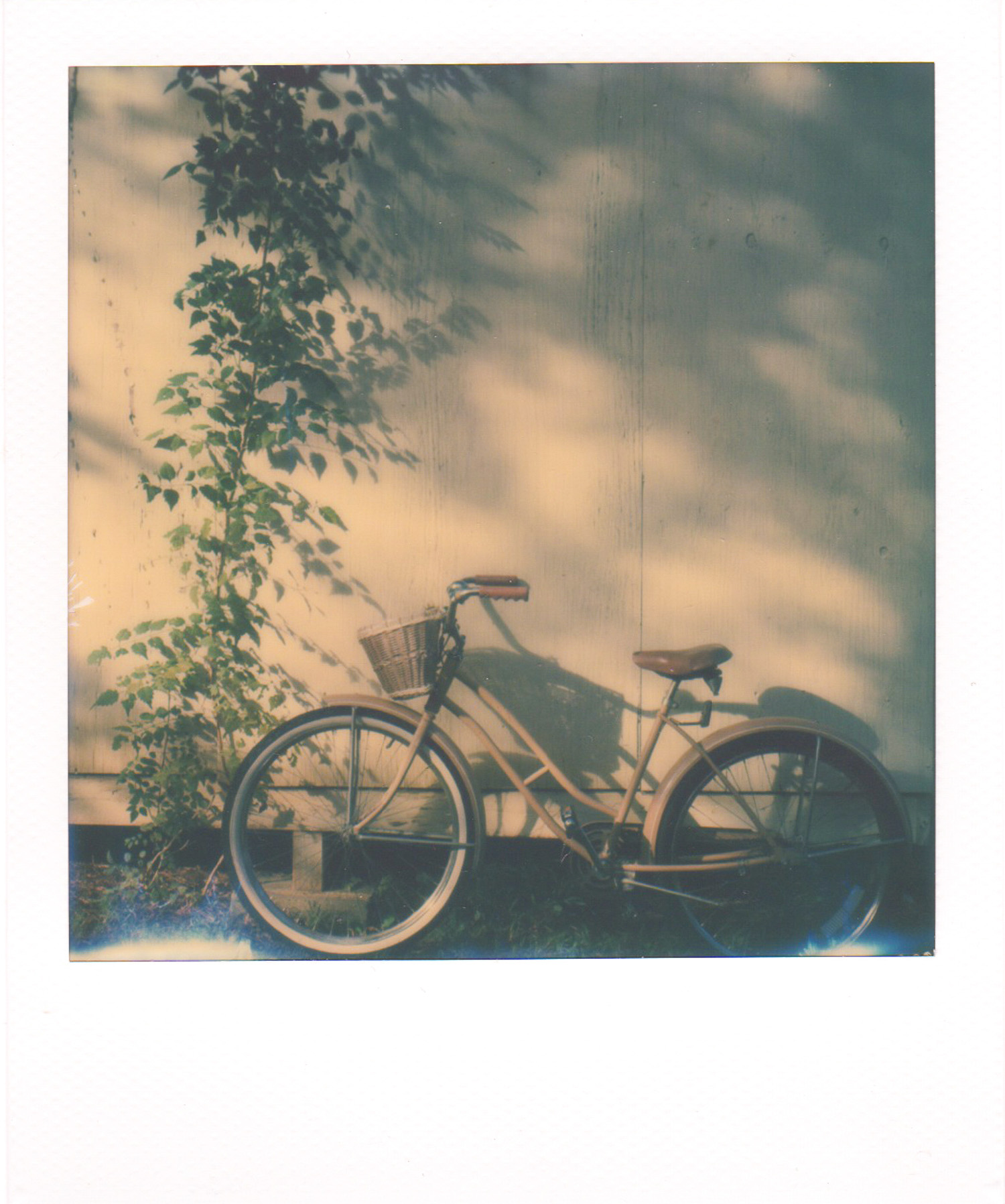 Atlanta and Amsterdam Bikes by Andrea Jenkins