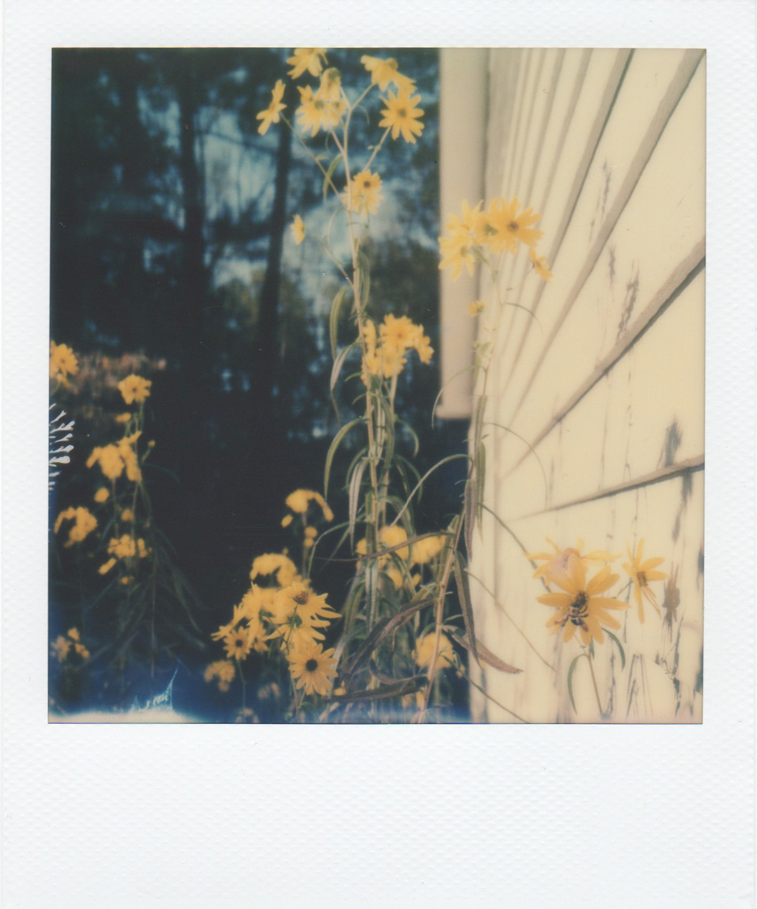 Atlanta and Amsterdam Flowers by Andrea Jenkins -  Hula Seventy