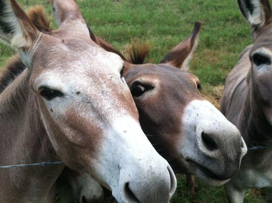 burro4.jpg