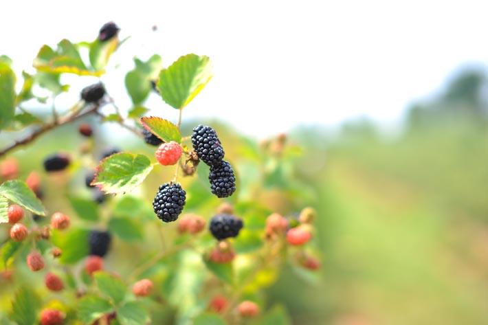 Hopefully not the last berries of the season...