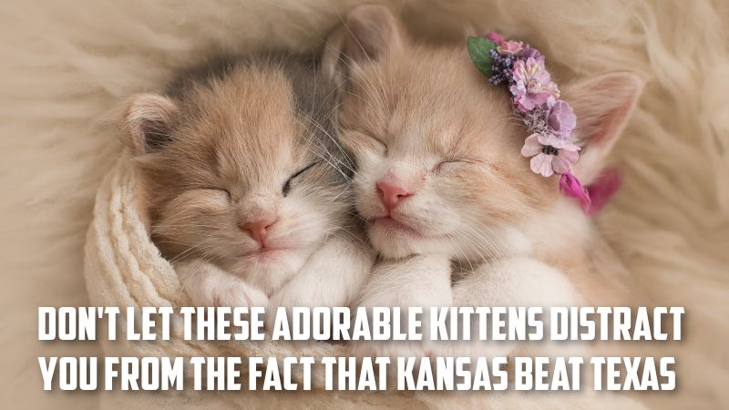 Texas Kittens.png