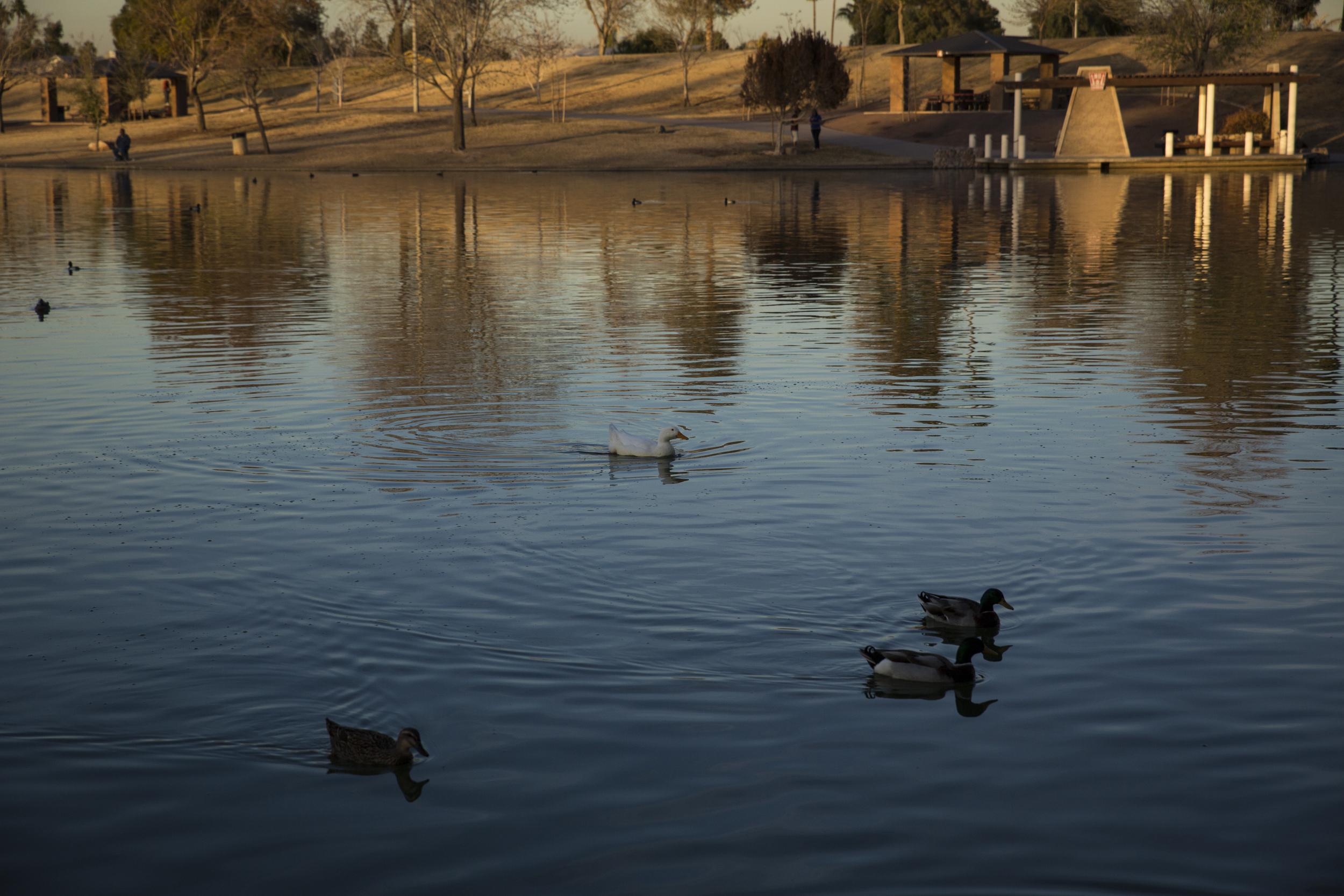 Kiwanis-Park-Tempe-AZ-4.jpg
