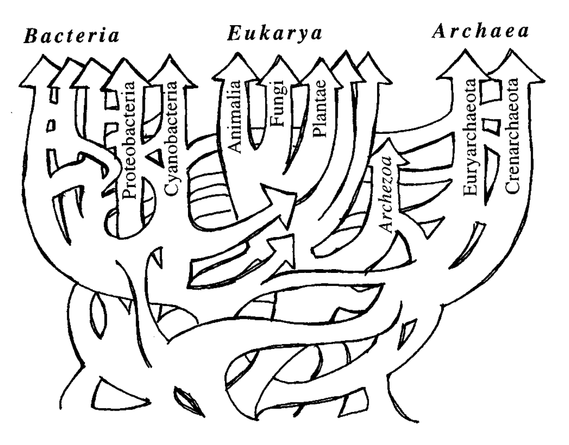 A humorous but also dead serious illustration of the confusing free-for all at the tree of life. Borrowed from Doolittle, 1999