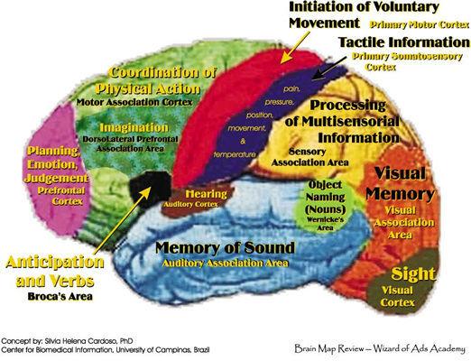 BrainMap.jpg