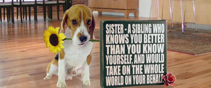 Sister Beagle