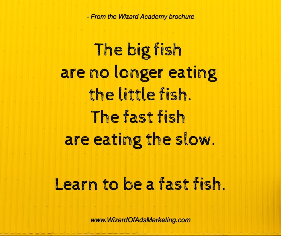 fast fish .jpg