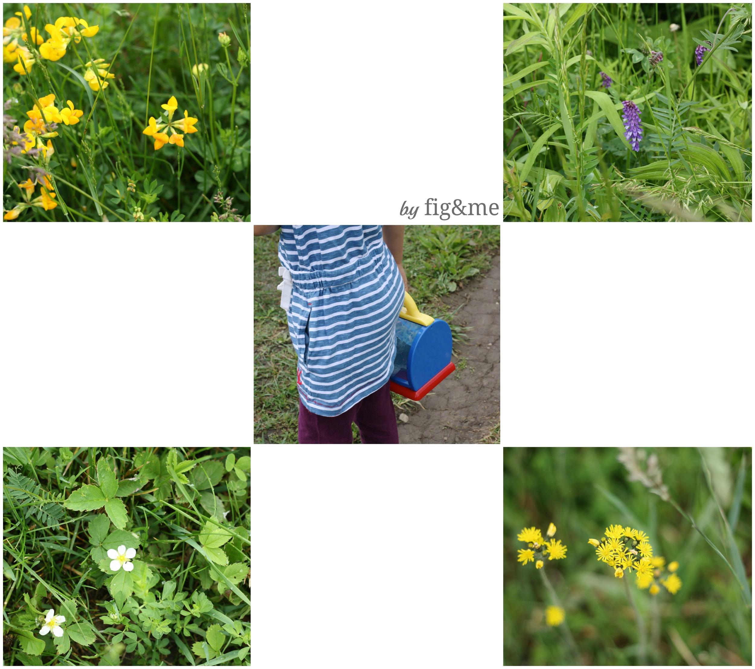 Southern Ontario common wildflowers