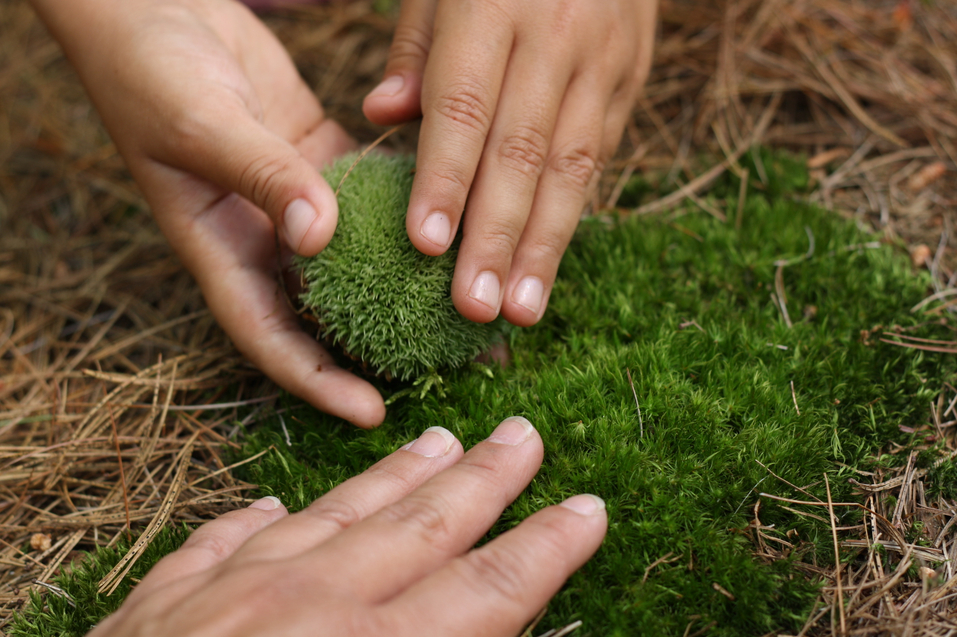Let's touch this moss Mom, by Fig and me.