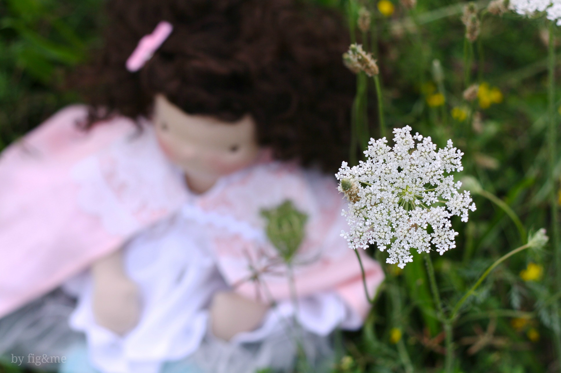 Queen Anne's Lace by Fig and me.