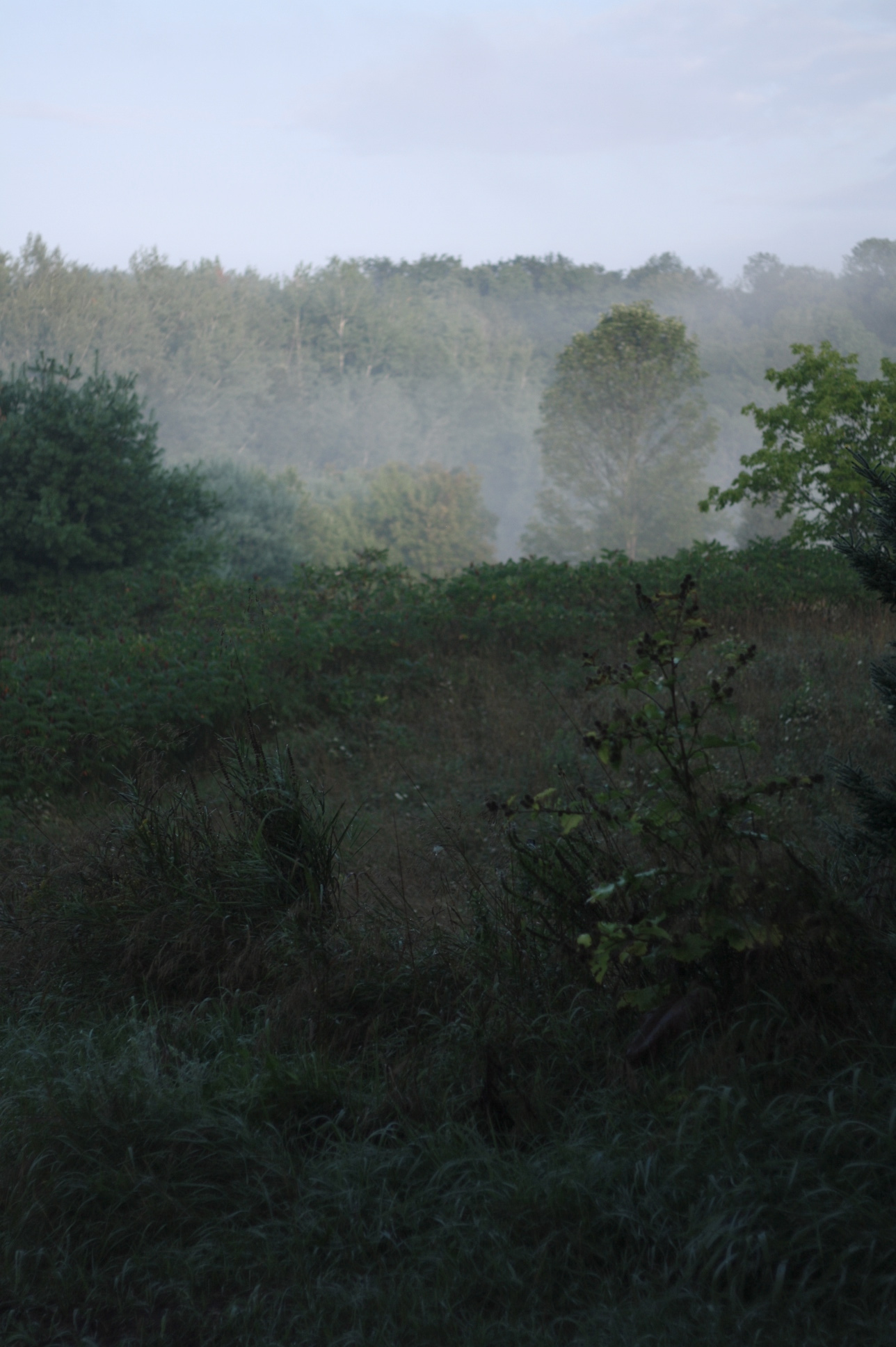 In the mist of late August, by Fig and me.