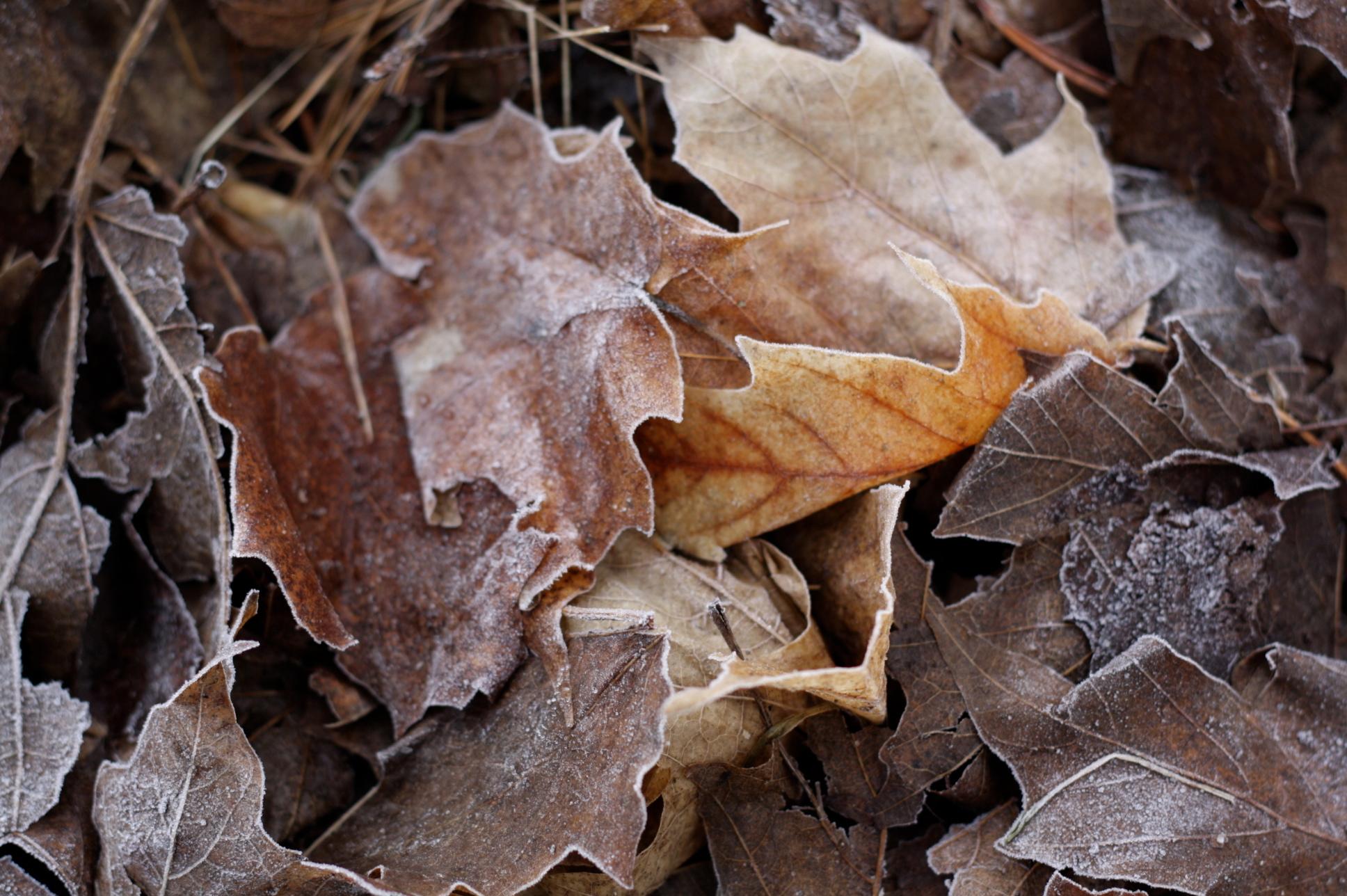 leaves-figandme.jpg
