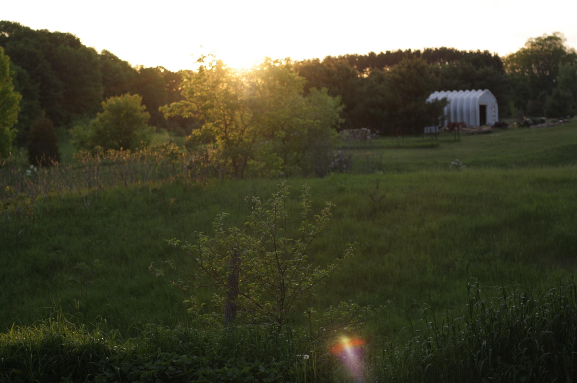 garden8.jpg