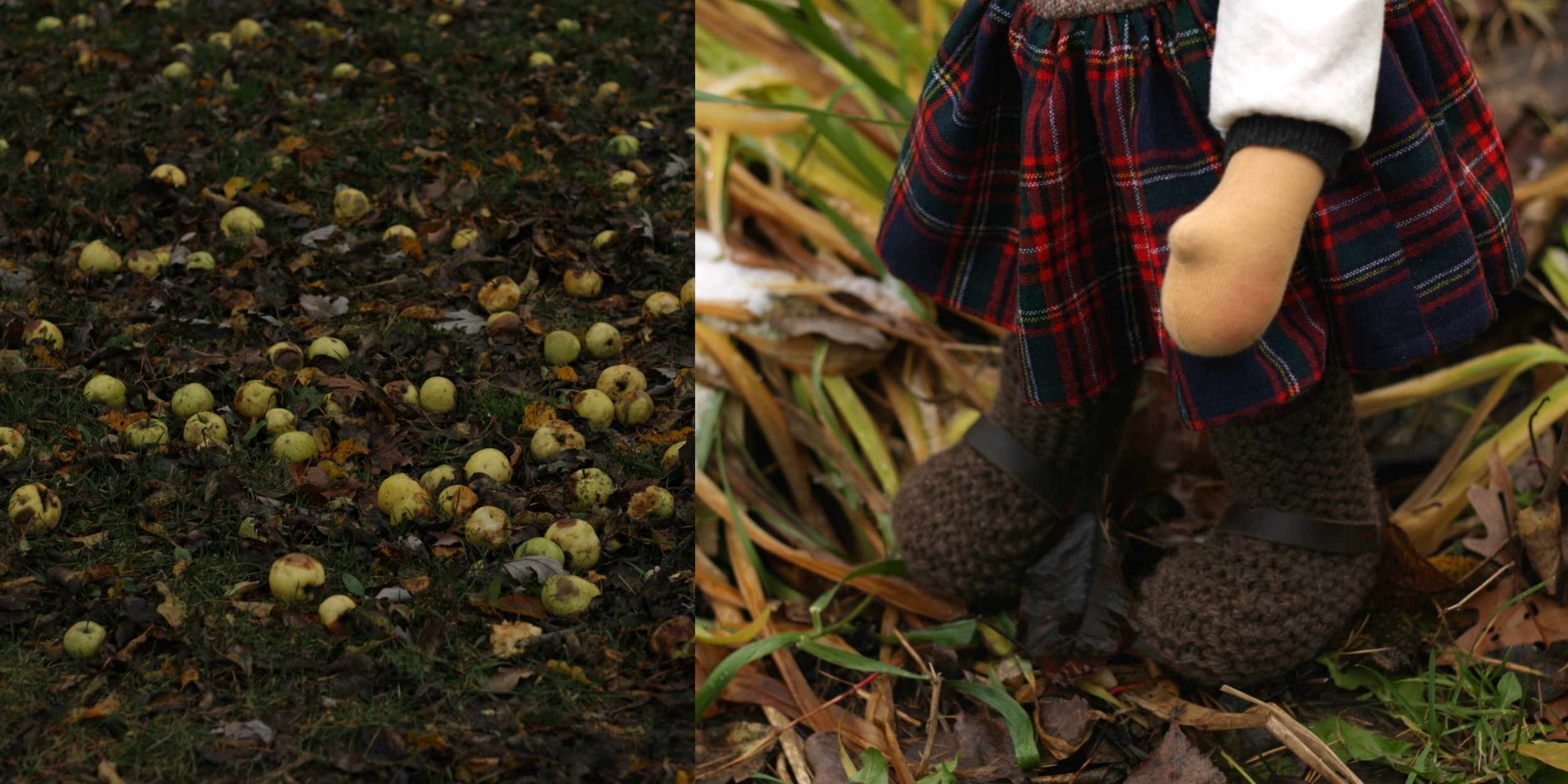 """And lots of windfall rotten apples, """"such a shame"""" said Sweet Kilda, who wanted to bake apple crumble. By Fig and Me."""