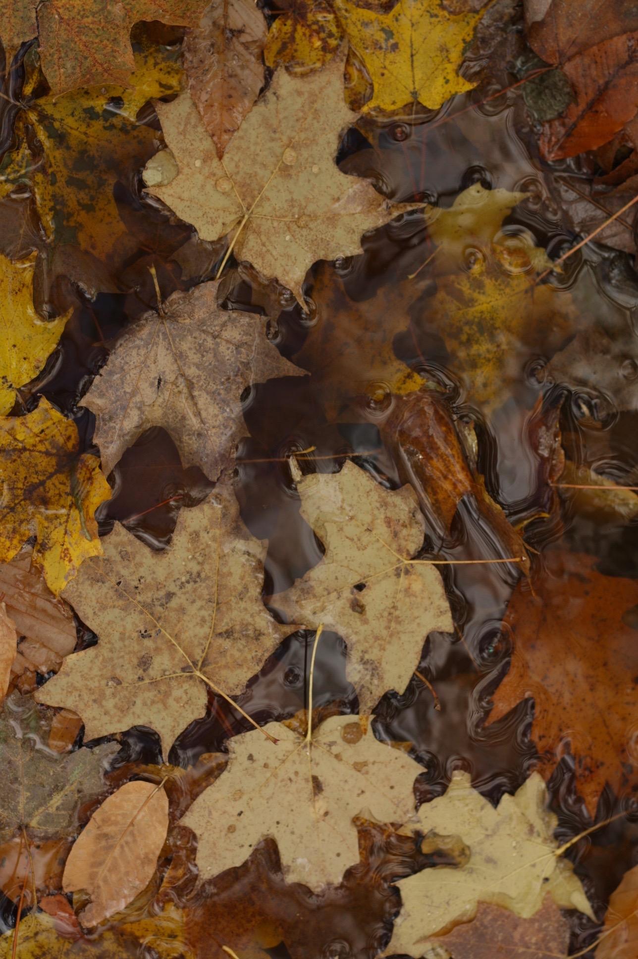 follow-the-fall-figandme.jpg