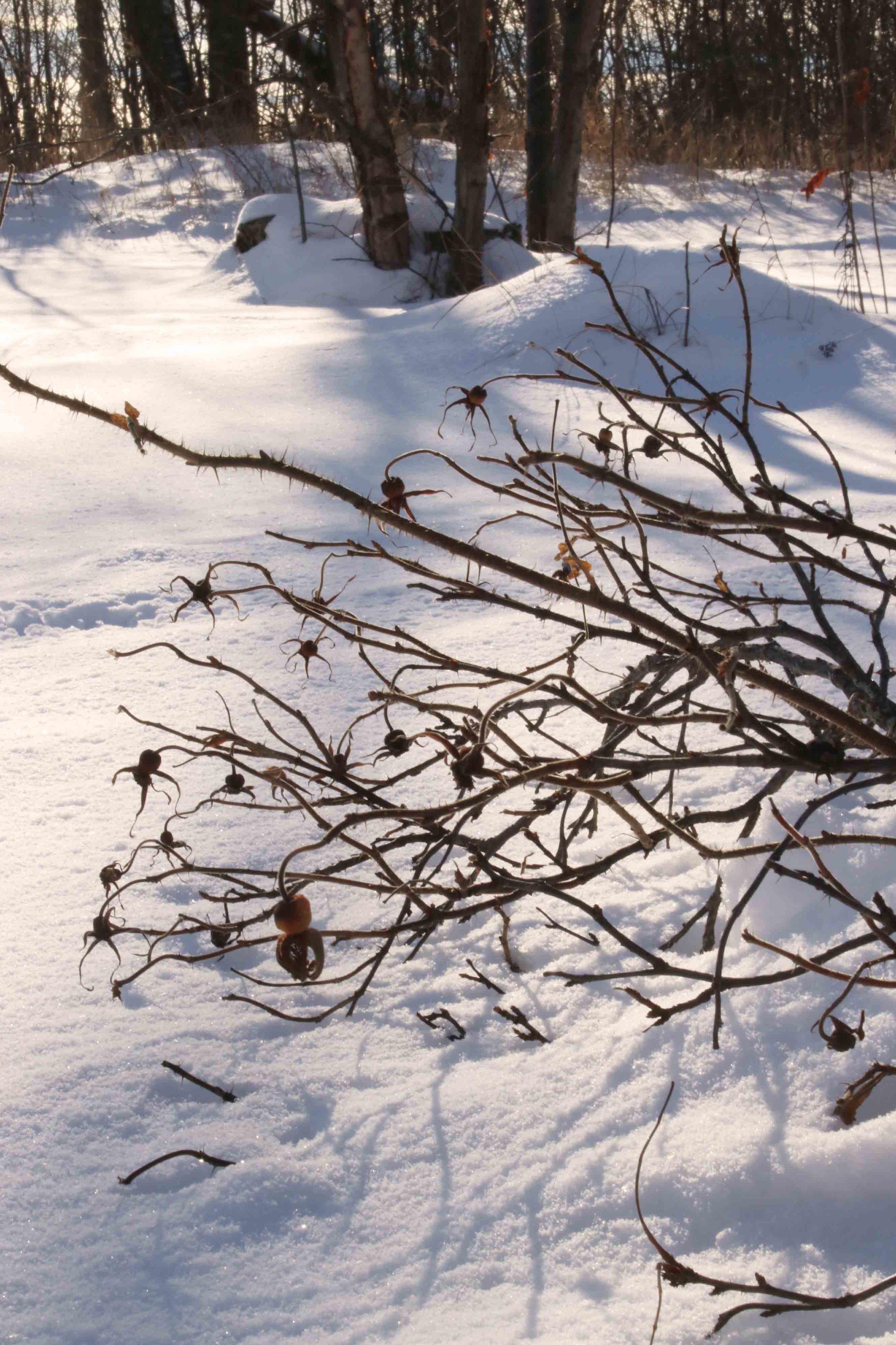 winter-scenes.jpg
