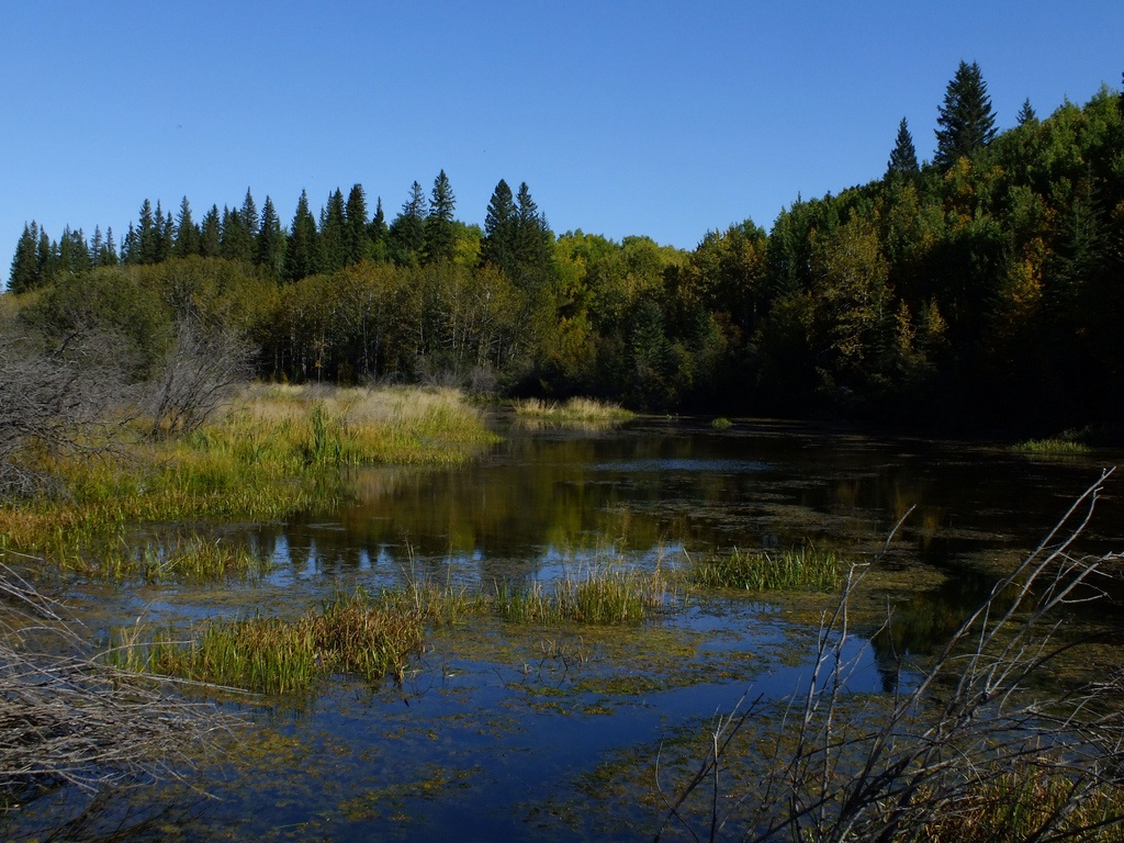 Weaslehead Flats is natural area full of wild life. There are pathways throughout the park that allow Calgarians to enjoy nature in their own backyard.
