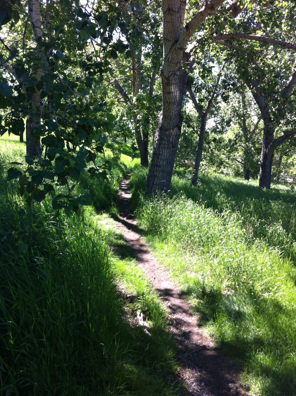 While parts of the Bow River north-side bluff walk are open offering spectacular views, other places are more forested and offering a more intimate and contemplative space.