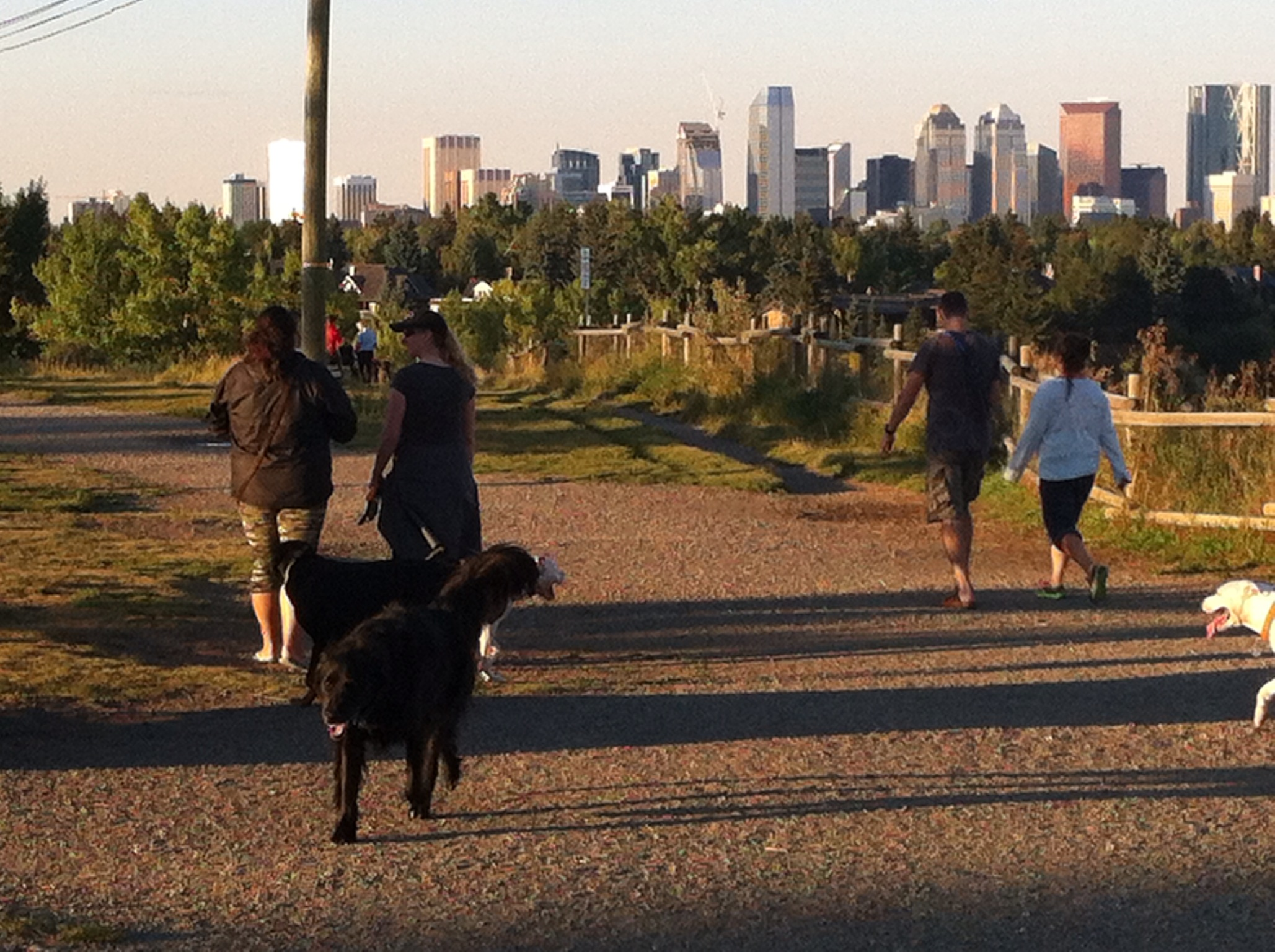 Literally thousands of Calgarians are in dog parks every evening walking their dogs and chatting with fellow citizens.