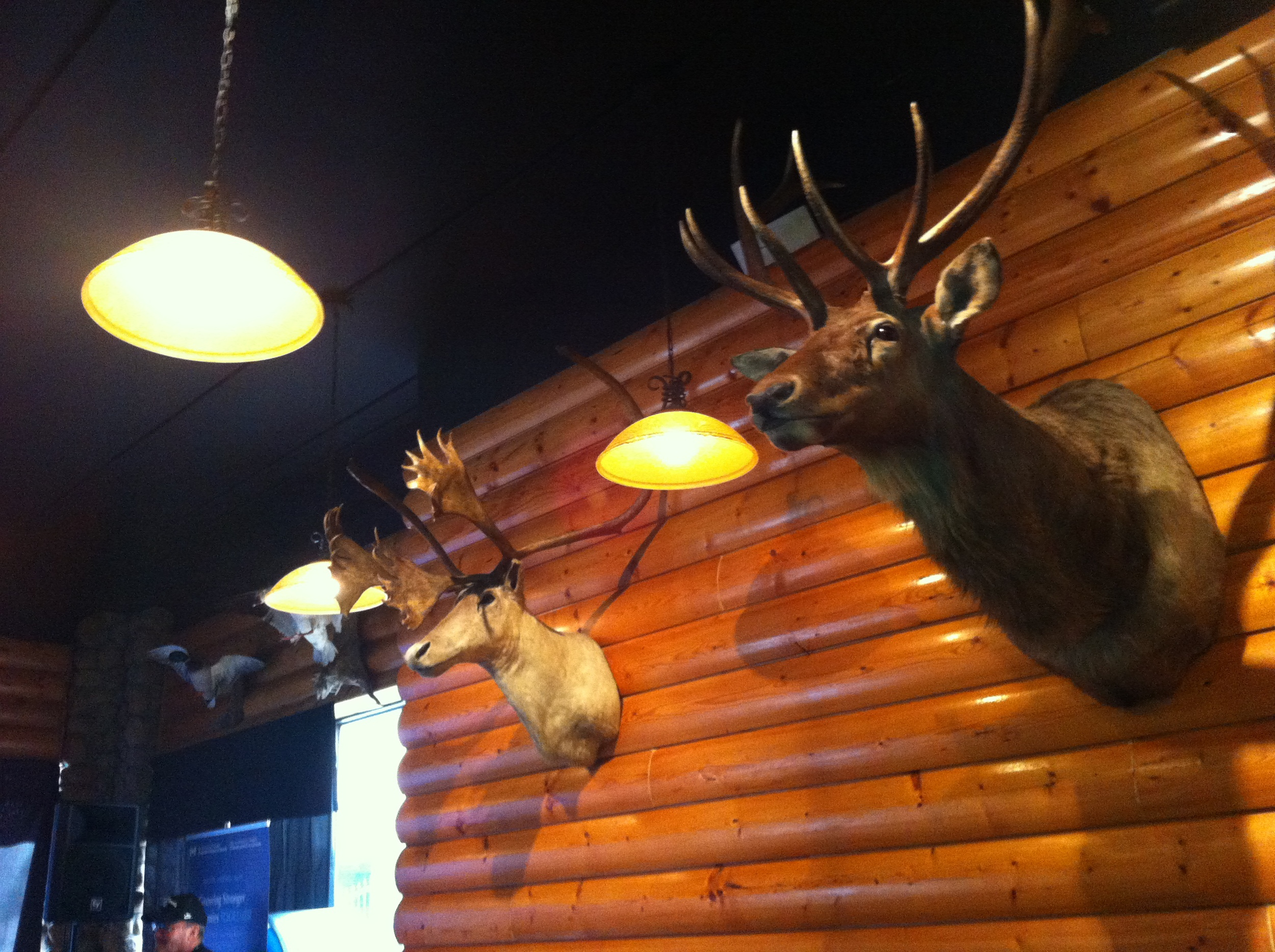The feature wall of mounted animal heads is impressive.