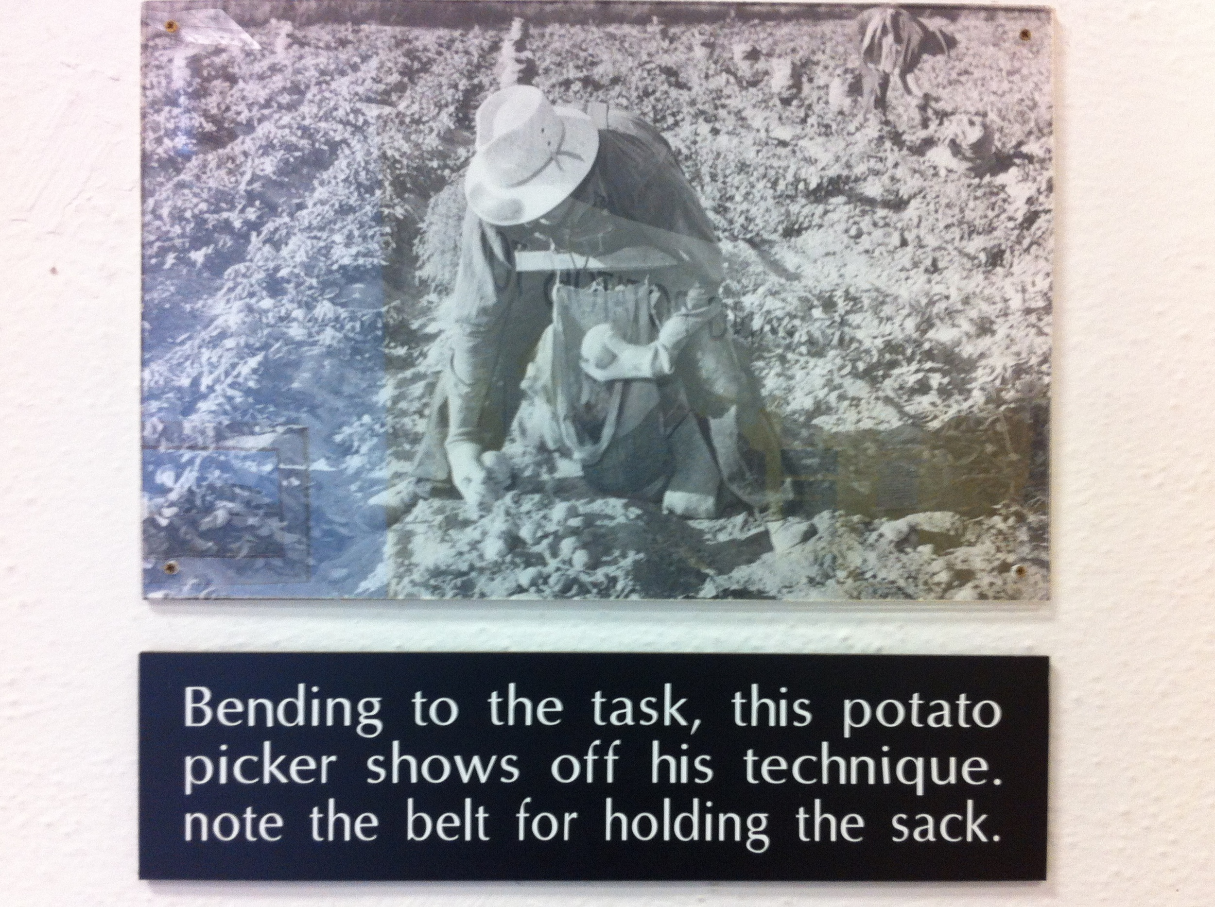 potato pickers
