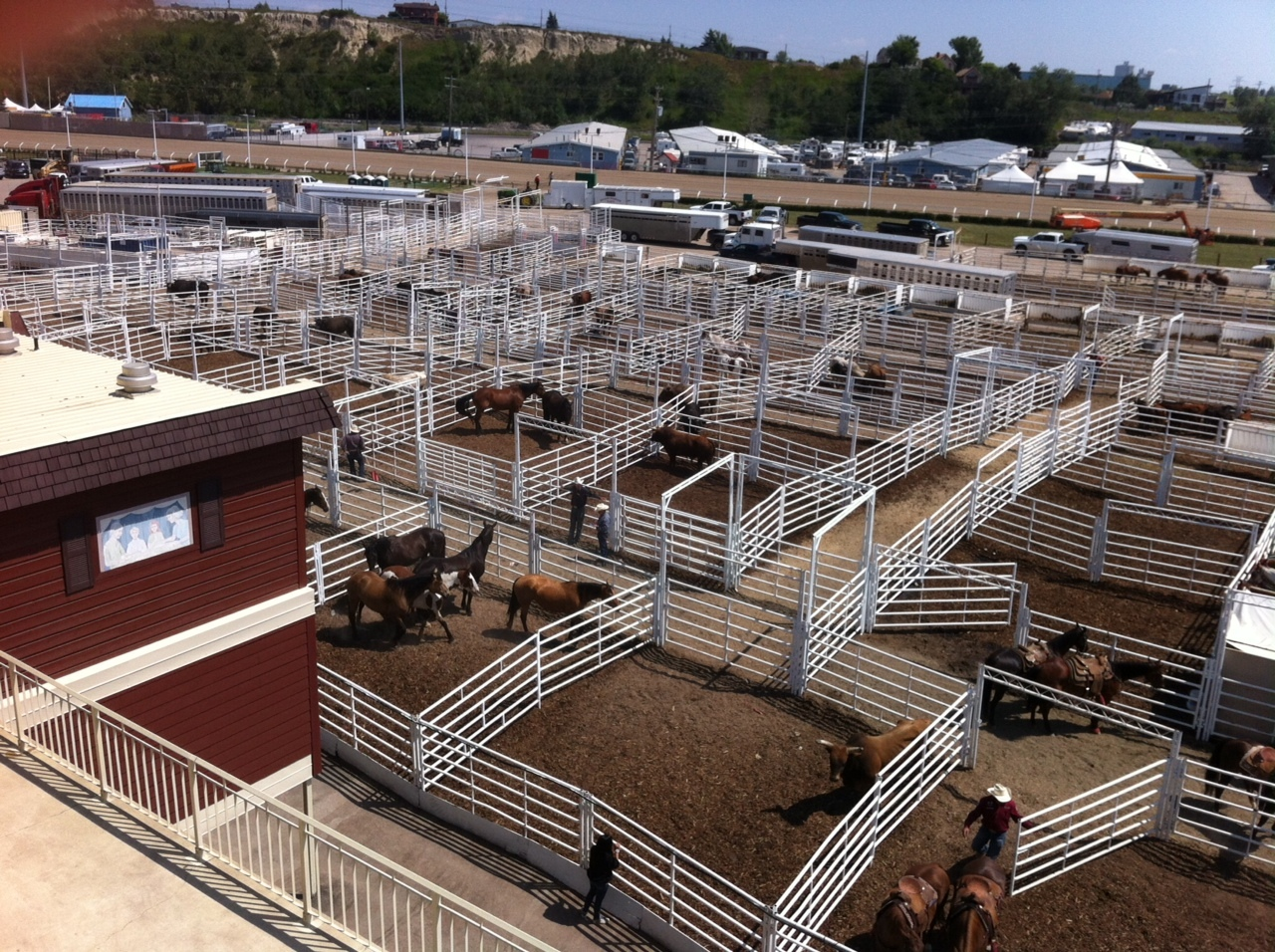 Behind the infield corrals herd the animals into the infield for their performances.  At the Stampede humans and animals are treated equally! Everyone is well fed, well watered and winners get prizes.
