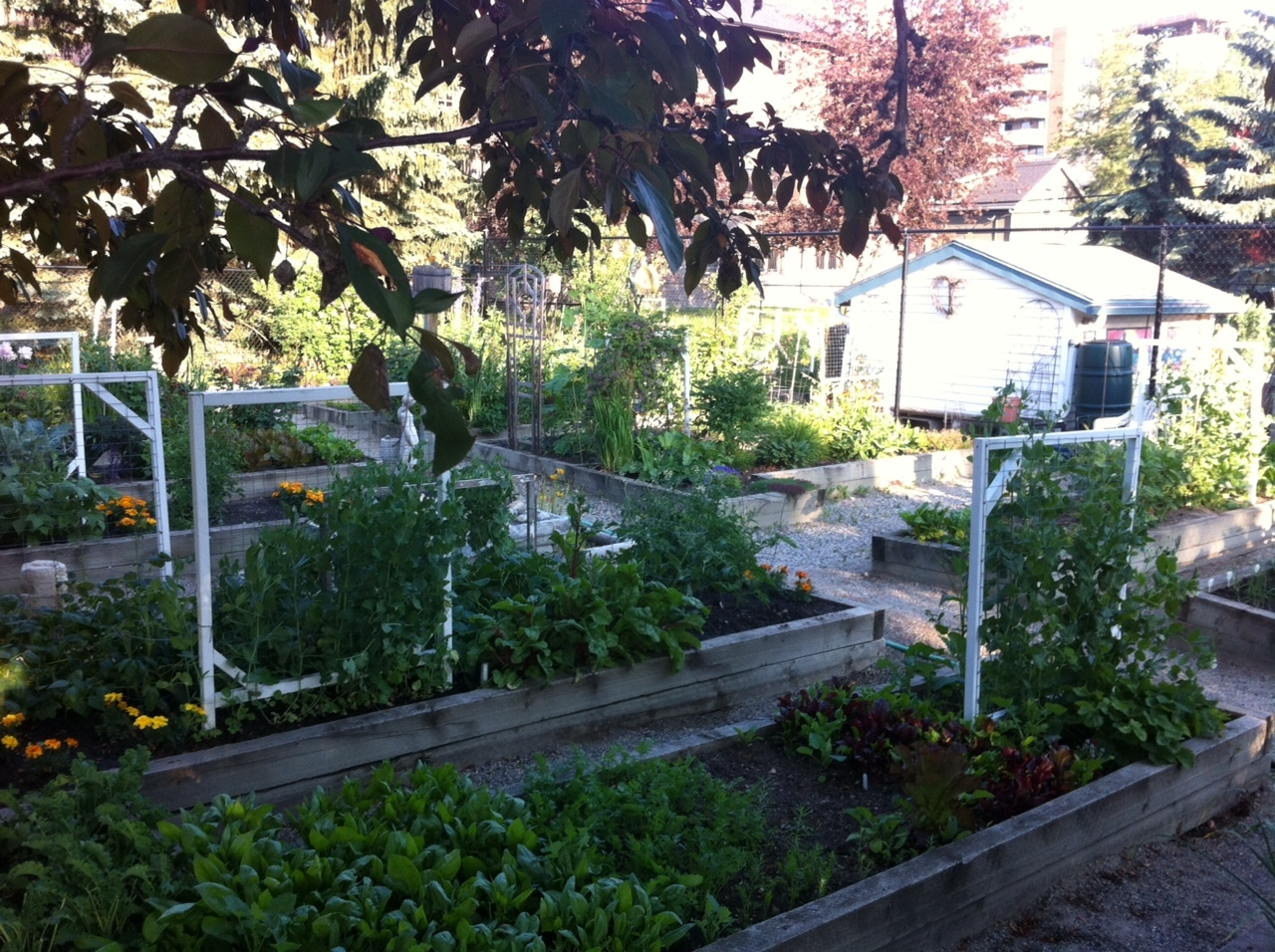 The park includes a wonderful community garden.