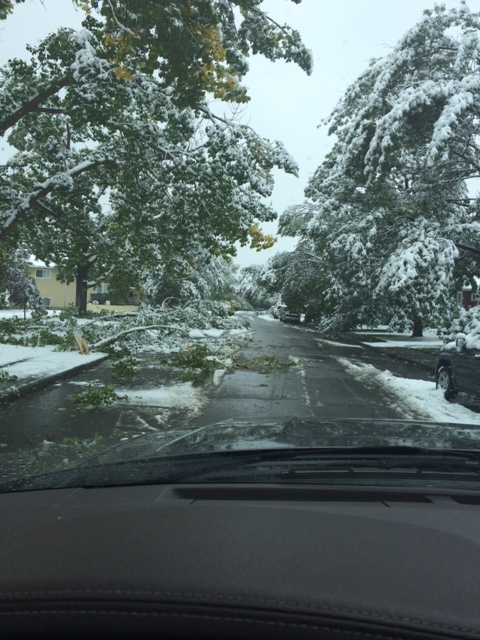 The streets of every inner city community in Calgary were strewn with fallen branches after the September 8 and 9th snow storm. Another reminder that we not only live on the treeless prairies, but on the edge of the Rockies.