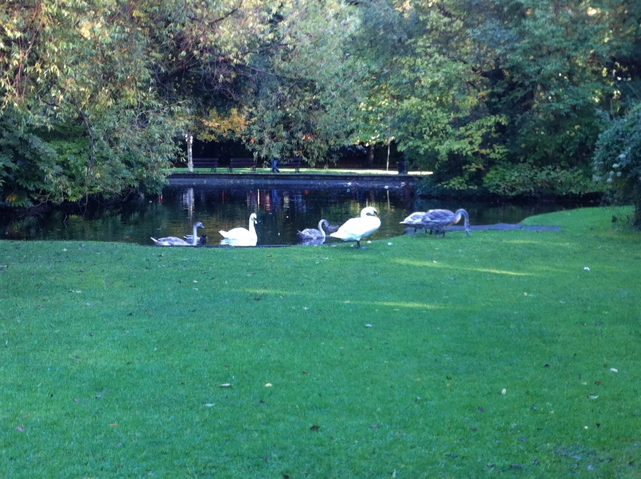 Stephen's Green has a wonderful pastoral ambience to it.