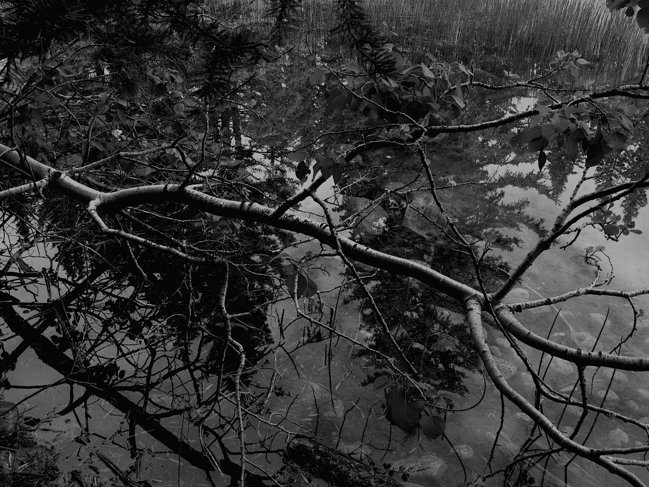 Pond on 6