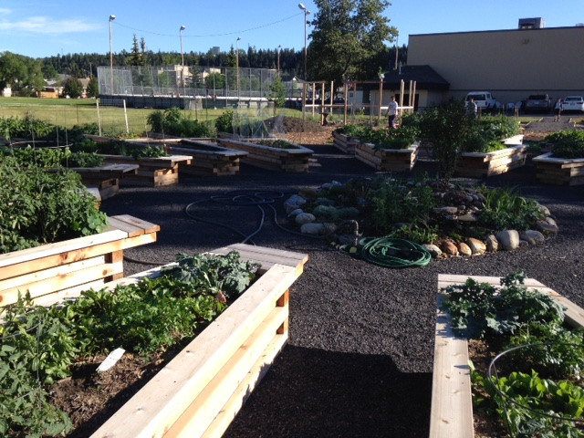 Parkdale's Community Garden is a great addition to their community block that includes the community centre, playing fields, outdoor hockey rink and beach volleyball court and a wonderful train-themed playground.