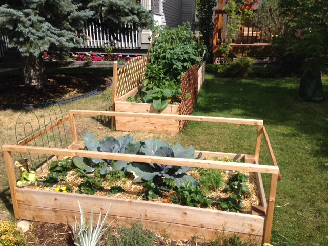 Raised vegetable gardens in the front yard are popping up all over Calgary.