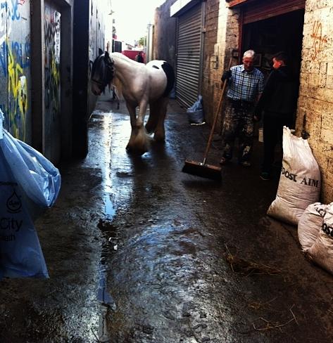 Dublin horse alley