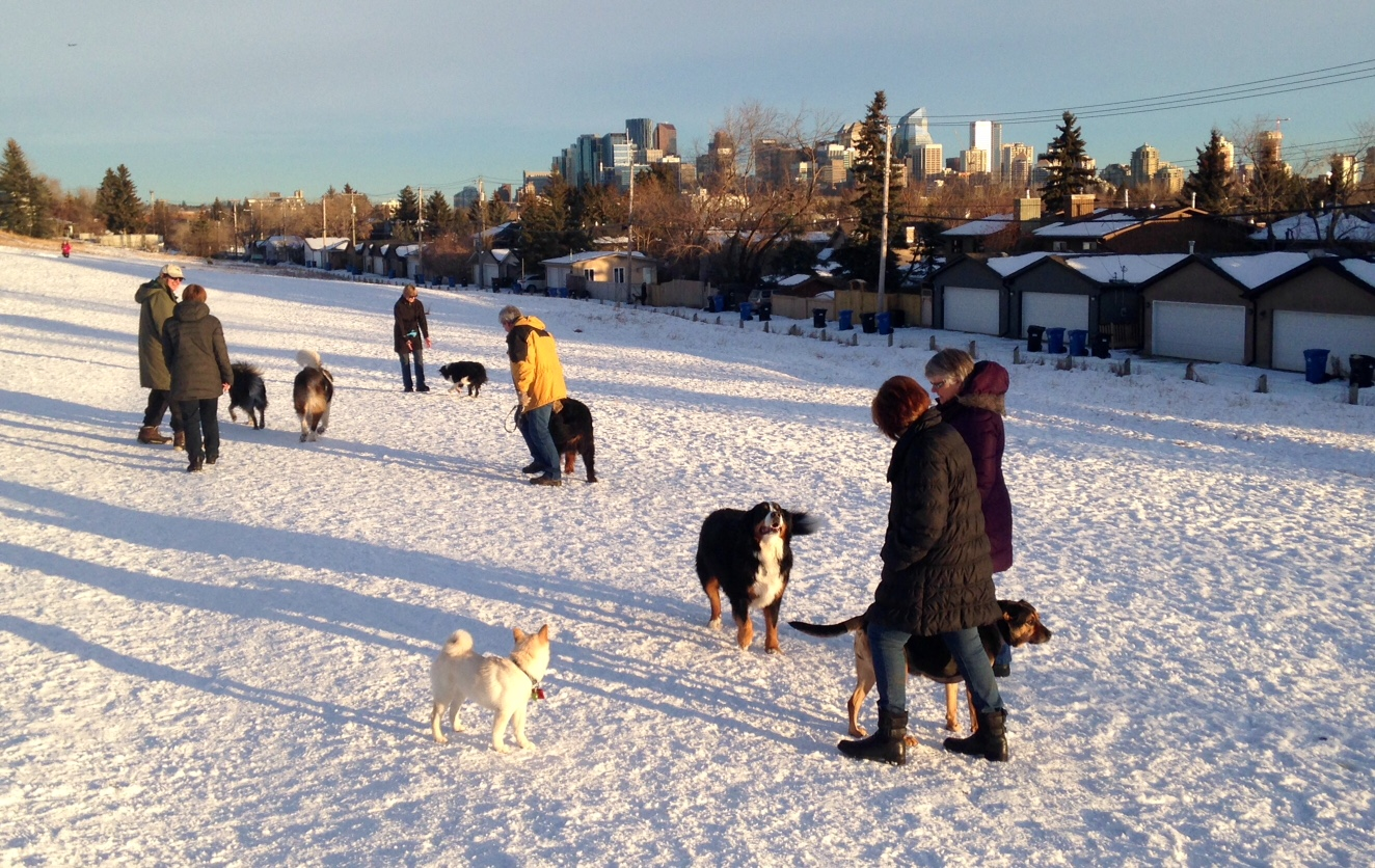 Winter dog walking can be a community event.
