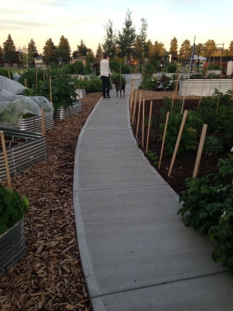 Altadore School also has many highend features like the metal vs wood raised gardens, poured concrete sidewalk and two large circular concrete areas that will become outdoor classrooms.